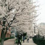 都内の穴場お花見スポット